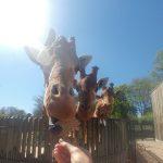Im Dresdener Zoo
